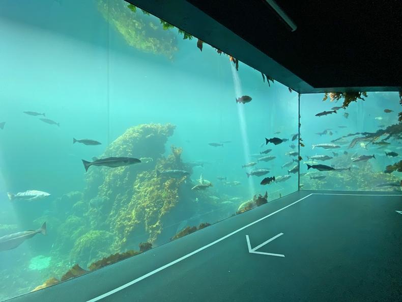 Der Atlantikpark ist eines der größten Salzwasser-Aquarien Nordeuropas